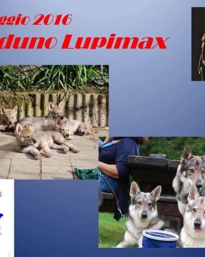 Raduno Cane lupo cecoslovacco LUPIMAX
