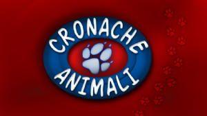 Cronache animali 1 Dicembre /2015