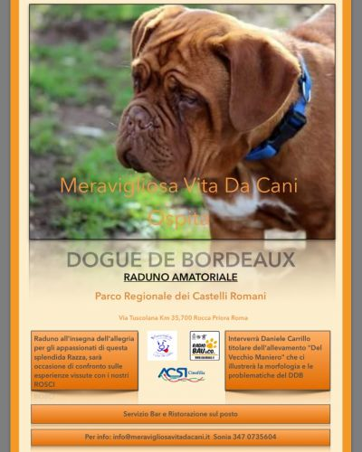 Raduno Dogue de Bordeaux