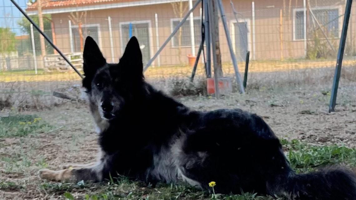 Sono Haru Cane delle Alpi Apuane